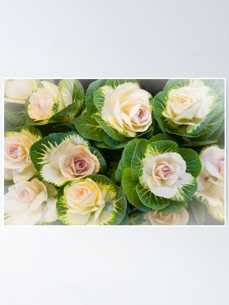 Alternate view of Flowering Kale Bouquet Poster