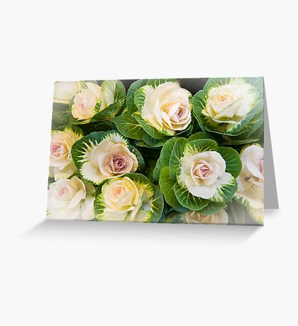 Flowering Kale Bouquet Greeting Card