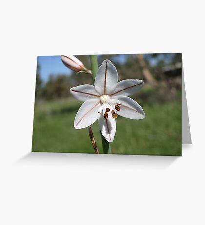 Asphodelus fistulosis Greeting Card