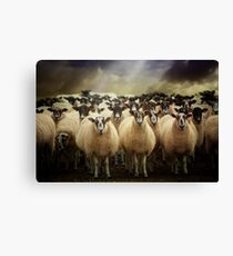 Sheepfest Canvas Print