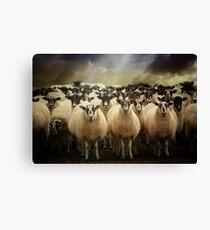 Sheepfest Canvas Print