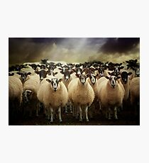 Sheepfest Photographic Print