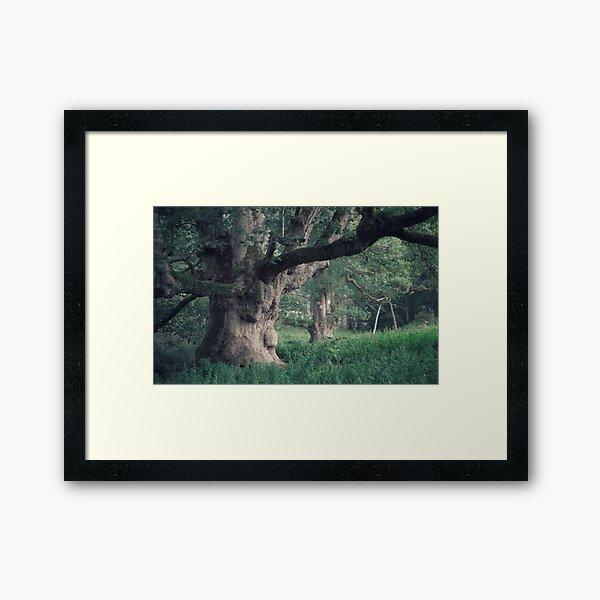 The Young Pretender Framed Art Print