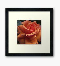 Orange Downton Abbey Rose Framed Print