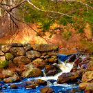 Simple Beauty of a Stream in Autumn by Monica M. Scanlan