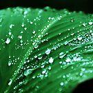 Green leaf by Iulia  Weiss