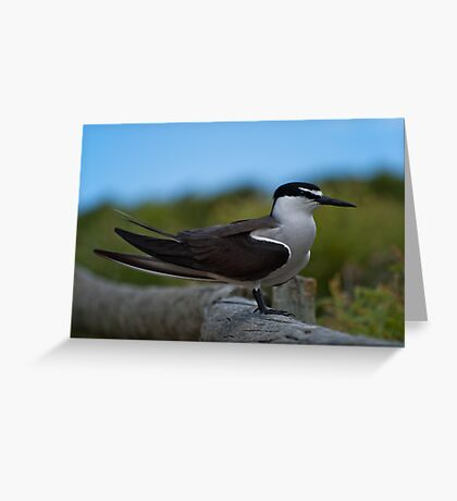 """""""Keeping A Watchful Eye Out"""" Greeting Card"""