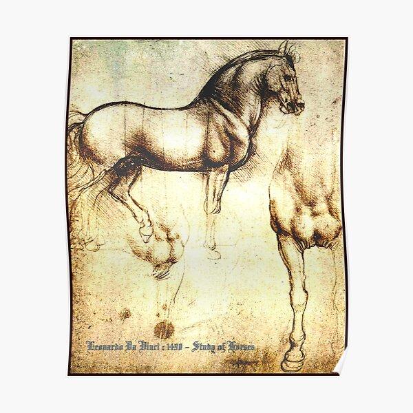 Study of Horse by Leonardo Da Vinci poster print