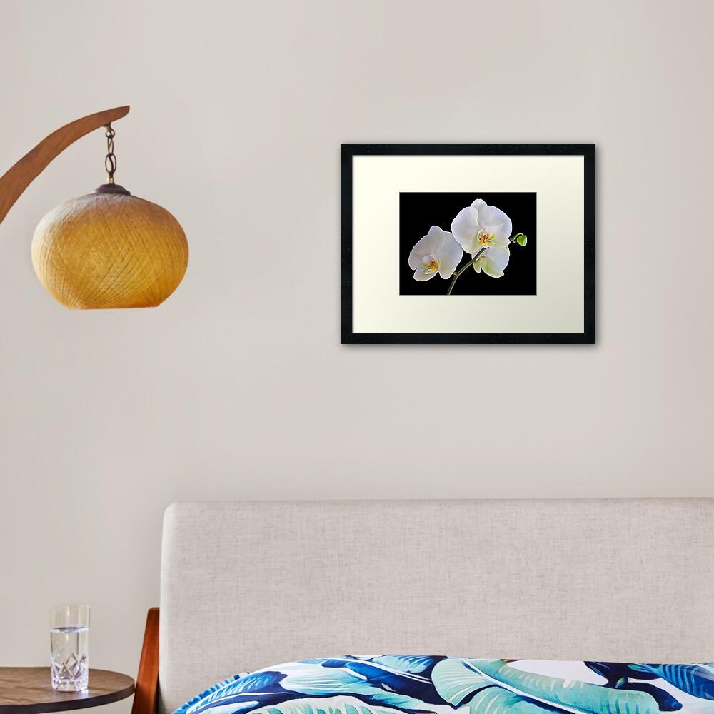 Orchid Dance Framed Art Print
