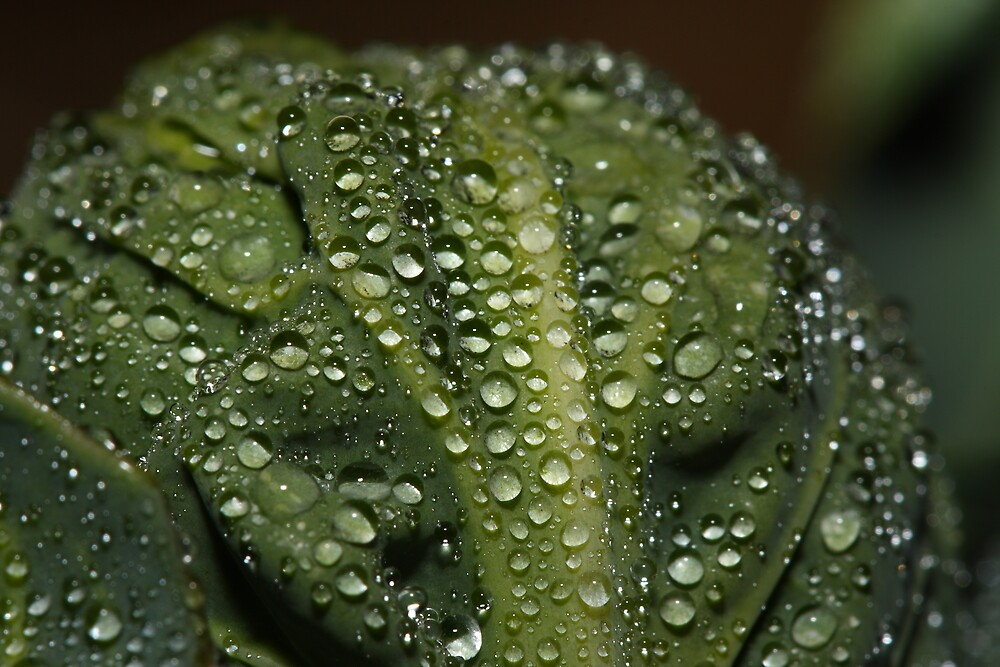 A Brussel Sprout in the Mist by Brian Dodd