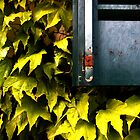 The green leave and the window by 1morephoto