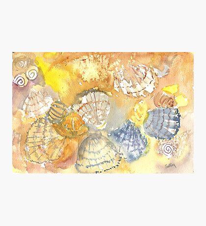 Sally Sells Sea Shells by the Seashore Photographic Print