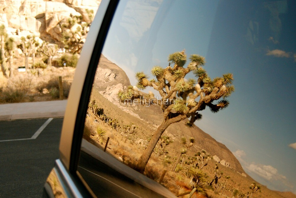 yucca reflection in the carpark at joshua tree by mellychan
