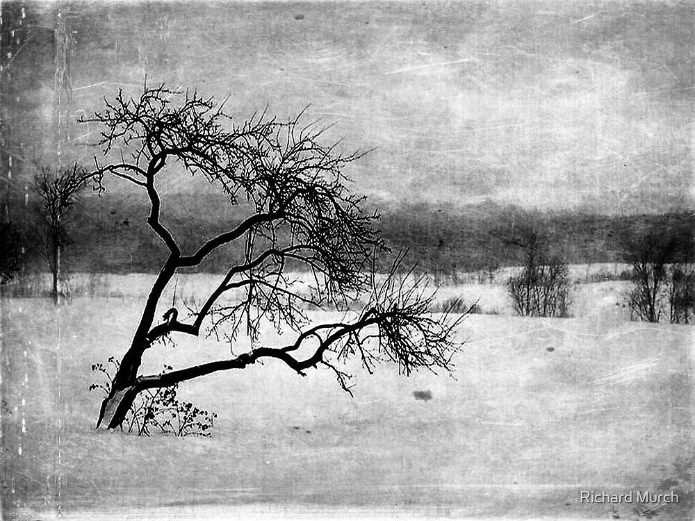 Winters Form by Richard Murch
