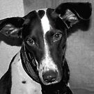 Rufino is my name and barking is my game by Tarolino