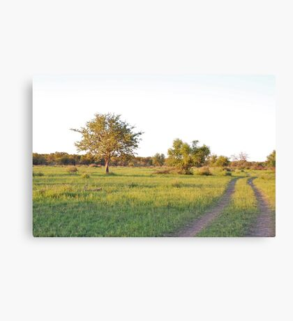 into the bush, madiwke, south africa Canvas Print