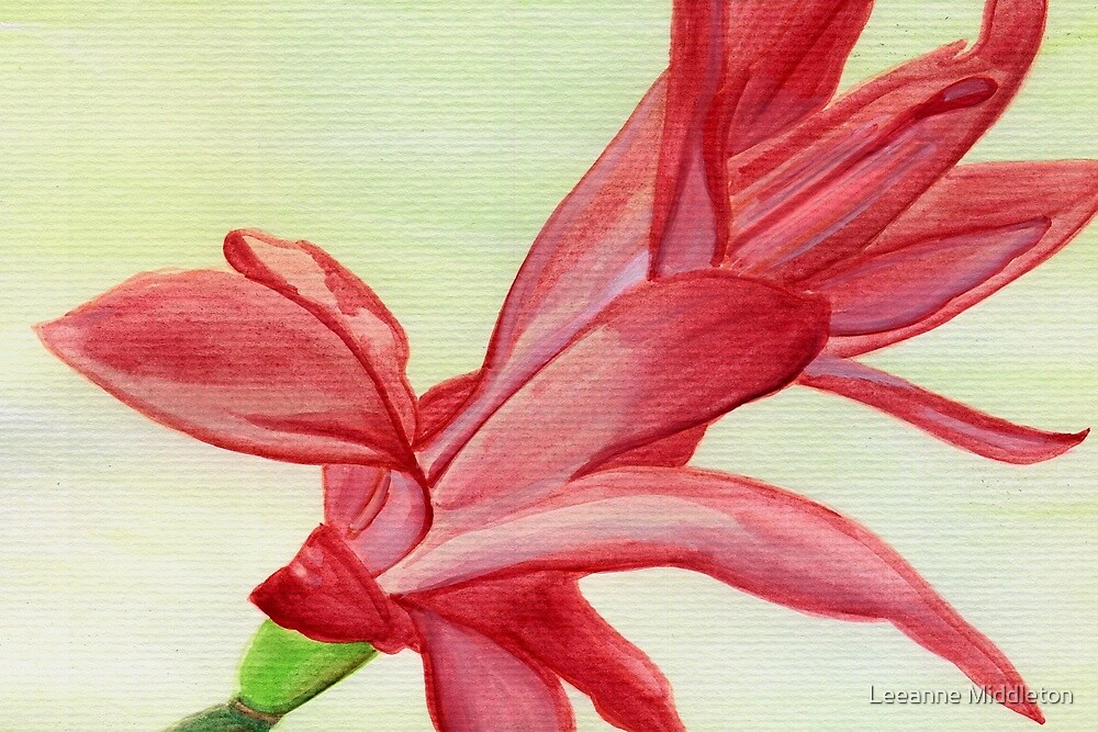 easter/christmas cactus by Leeanne Middleton