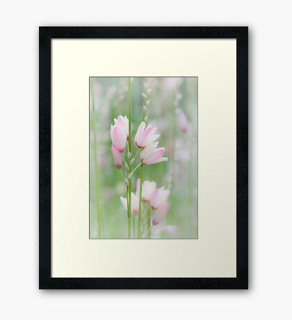 Soft Flowers Framed Print
