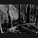 Slash/Burn by Etakeh