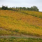 Vineyards in Gold by Fran0723