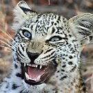 Mom i am hungry! by jozi1