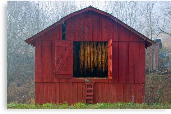 Carolina Tobacco Barn by Jane Best