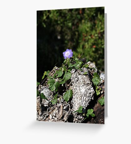 Basking In Glory Greeting Card