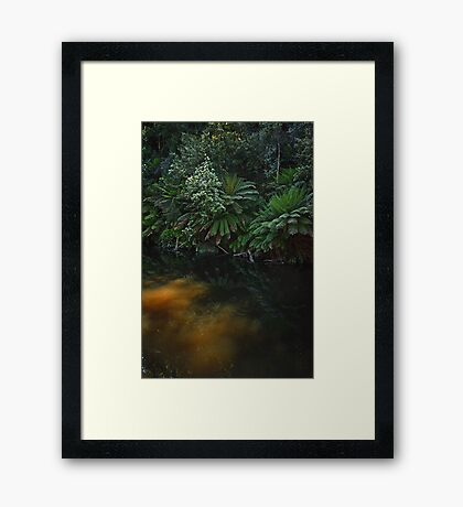 Fernglade reflections Framed Print