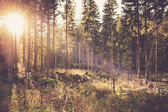 Dreamy forest by Brixhood