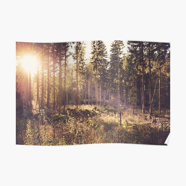 Verträumter Wald Poster