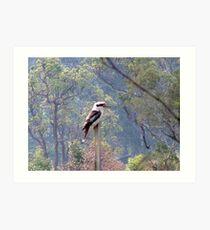 kookaburra on a post Art Print