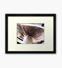 Underneath a field mushroom Framed Print