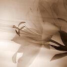 Whymsical Lilies Series.  No 4 by Lozzar Flowers & Art