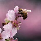 Busy Bee by yolanda