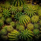 Cacti Cluster by Keith G. Hawley