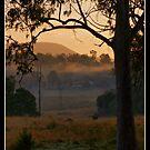 Mist of the Morn by Jennifer Ellison