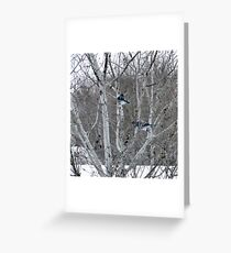 Aspens and Blue Jays Greeting Card