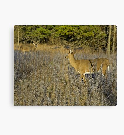 Is that you Buck?  Canvas Print