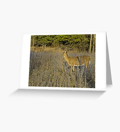 Is that you Buck?  Greeting Card