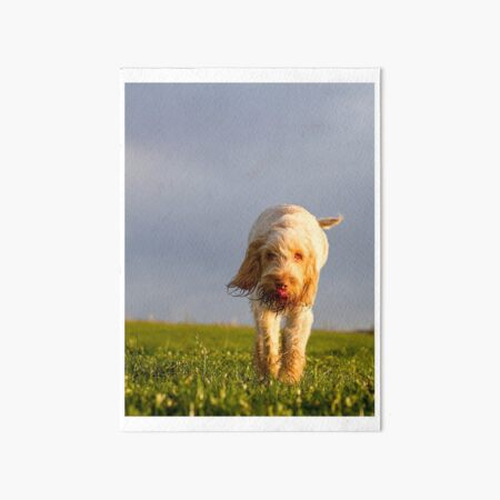 Time to taste the wind Spinone Art Board Print