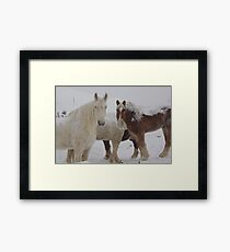 What Snow? Framed Print