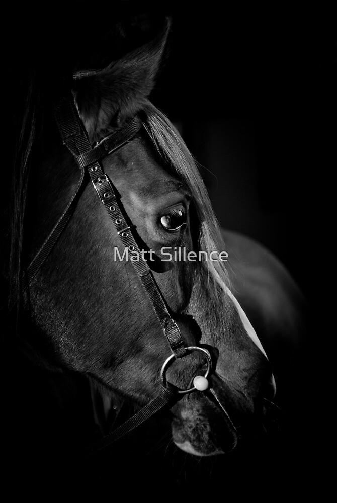 Horses Head by Matt Sillence