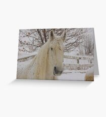 Snow Flakes on Knight Greeting Card