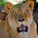 Lioness by Stuart Robertson Reynolds