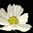 Flower by the Barbs by BCallahan