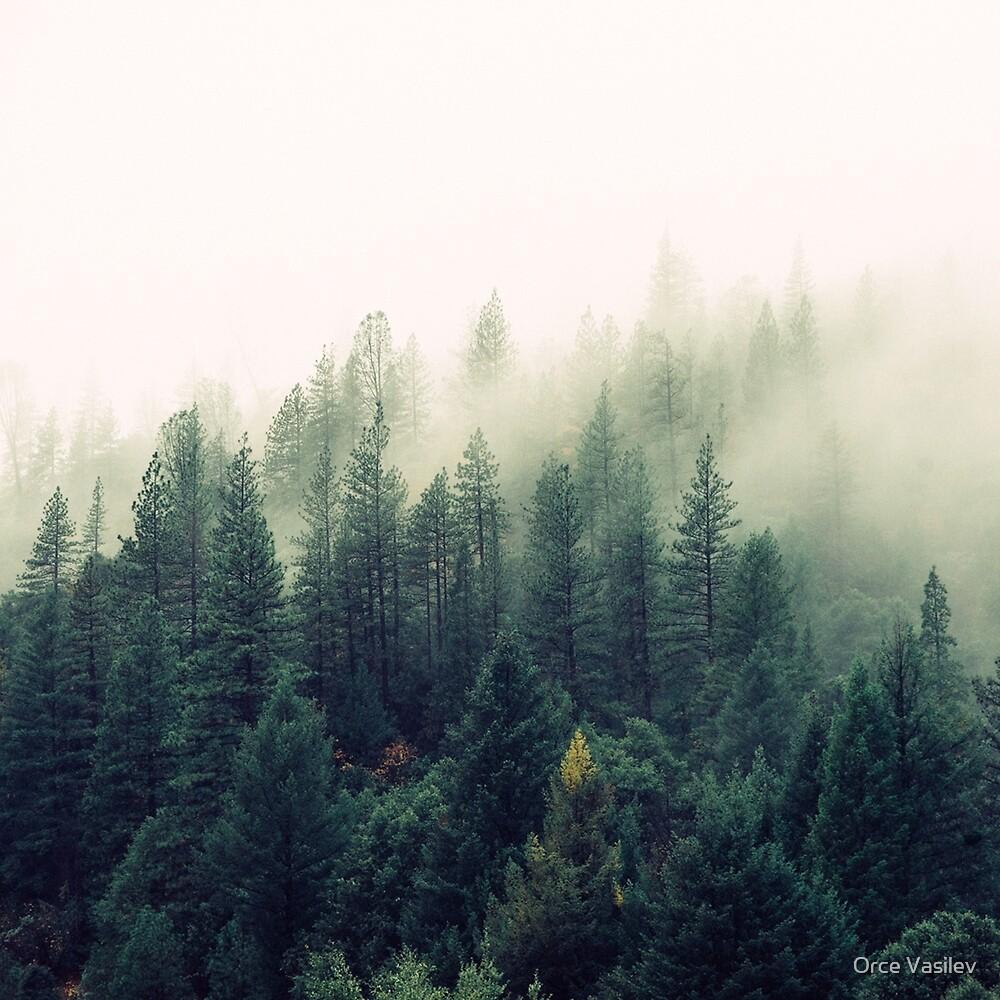 «Misty Forest» de Orce Vasilev