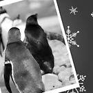 Penguin Christmas Card by Evette Lisle
