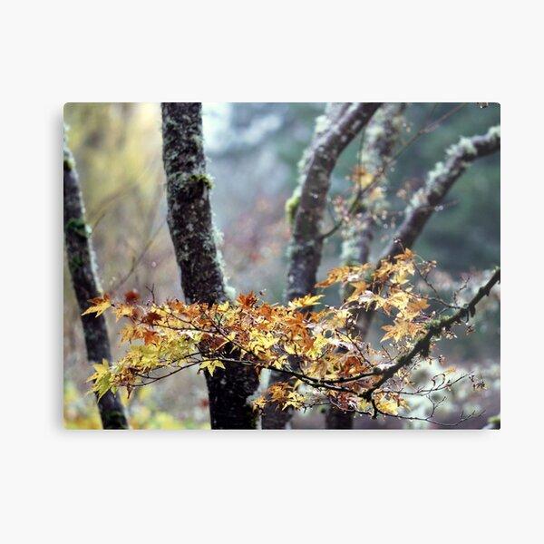 Autumn in Japan Metal Print