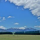 Hedges, Canterbury Plain, South Island, New Zealand. by johnrf