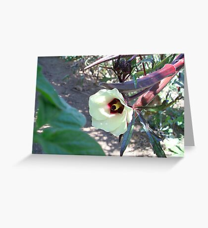 Red Okra in Bloom Greeting Card
